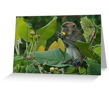 Macaque savoring the flavour Greeting Card