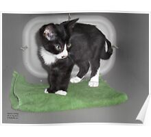 Magic Carpet Kitten Poster