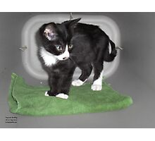 Magic Carpet Kitten Photographic Print