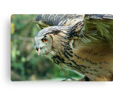 Eagle Owl Ready for Take Off Canvas Print