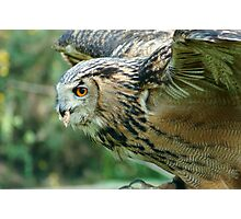 Eagle Owl Ready for Take Off Photographic Print