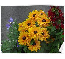 Golden Beauties - Floral Display Poster