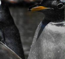 Penguin, Edinburgh Zoo by Den McKervey
