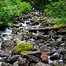 Mountainside Stream by Stacey Lynn Payne