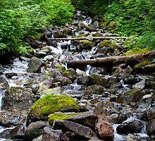 Mountainside Stream by Stacey Lynn Payne