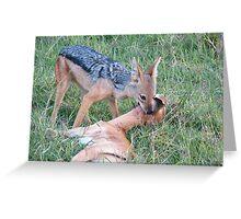 Jackal kills a gazelle Greeting Card
