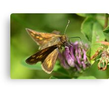 Skipper Canvas Print