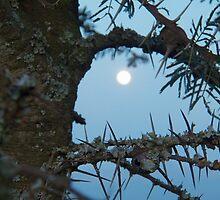 Moon  by Panayiotis Zavros