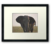 Huge elephant Framed Print