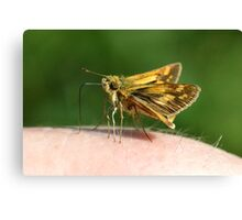 Skipper diggin' my sweat Canvas Print