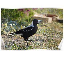 Back yard Aussie birds 06 Poster
