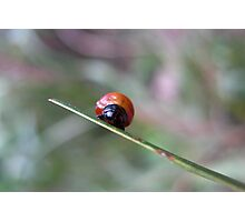Developing Ladybug Photographic Print