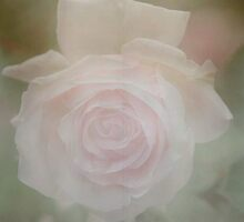 softening a rose and hoping my seams are straight……………… by dabadac