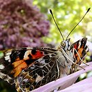 painted lady butterfly by tego53