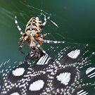 Web Sight by Kenneth Haley