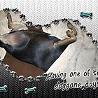 Doggone Days by Terri Chandler