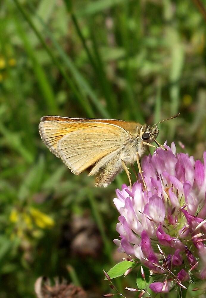 Skipper butterfly by SophiaDeLuna