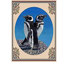 Cute Penguin Greeting Card - Any Occasion Photographic Print