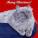 Bayou - A Portrait of a Himalayan Cat Christmas Card by Patricia Barmatz