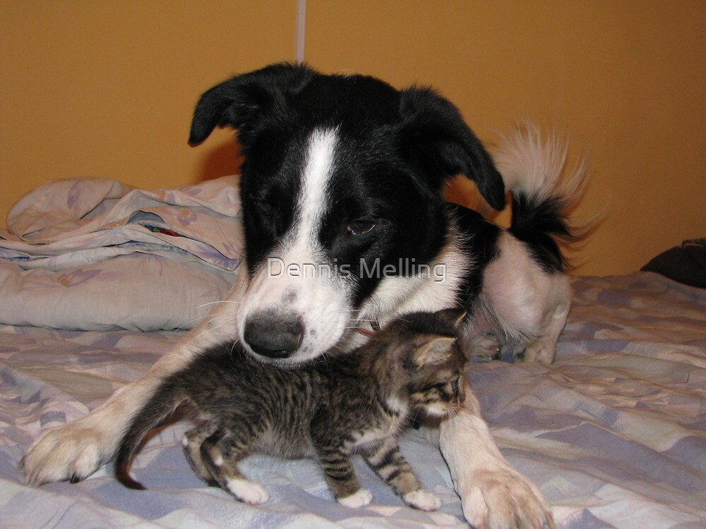 Patrick and Our New Stray Kitten by Dennis Melling