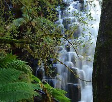 Dip Falls Tasmania by Elisabeth  Cannell