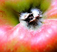 an apple a day.... by andreajansen