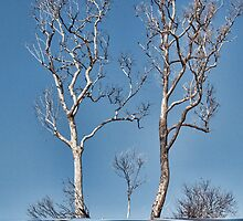 Bare Trees by Elaine Teague