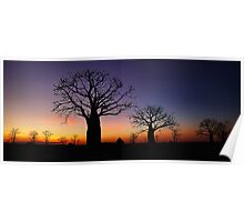 Spectacular boab sunset Poster