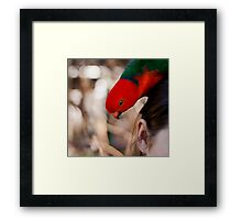 Hmmm...I wonder if I can fit in there... Framed Print