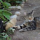 Sweety Cat Lounging On The Garden Path by Bearie23