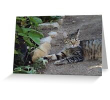 Sweety Cat Lounging On The Garden Path Greeting Card