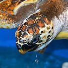 Lost little turtle by Deborah Clearwater