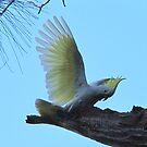 My Wing by Michael John