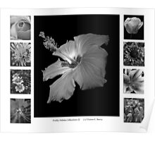 Pretty Petals II Black and White Poster