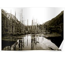 Nature - Lake with tree branches Poster