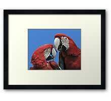 Red Parrots Framed Print
