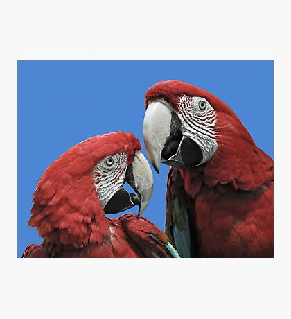 Red Parrots Photographic Print