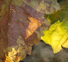autumn by Teresa Pople