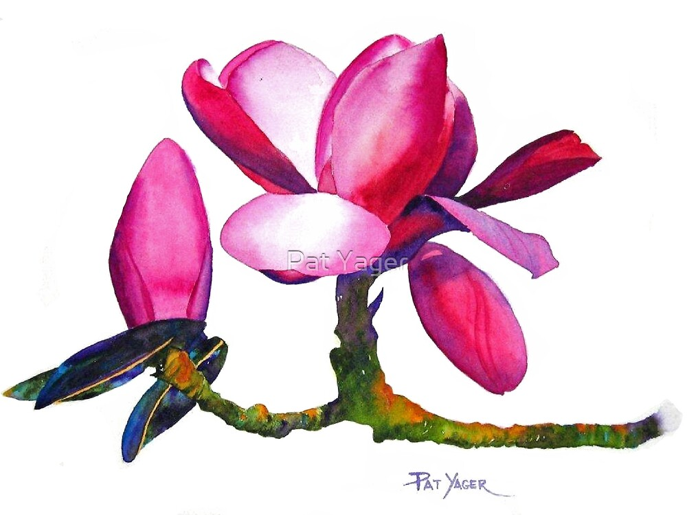 """""""Marwood Spring"""" Magnolia Watercolor by Pat Yager"""