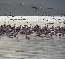 Sunset with flamingos and marabu by Panayiotis Zavros