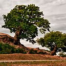 Bradgate Oaks by Aggpup