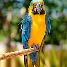 Florida Parrots by raceman