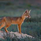 Twilight Fox by Kent Keller