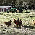 Old McDonalds Farm by Steph Peesker