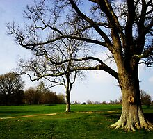 trees and vibrant green by James Taylor