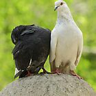 two wild pigeons sitting on a stone ball by Valerii Kotulskyi