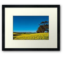 Canola Field - Caledon, South Africa Framed Print