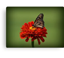 Butterfly on Zinnia Canvas Print