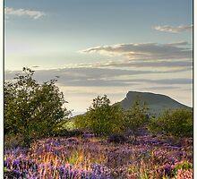 Roseberry Topping by Ian Yarrow