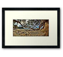 Waimama Bay Twisted Pohutukawas Framed Print